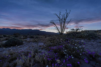 Photograph - Twilight Begins In The Desert by Scott Cunningham