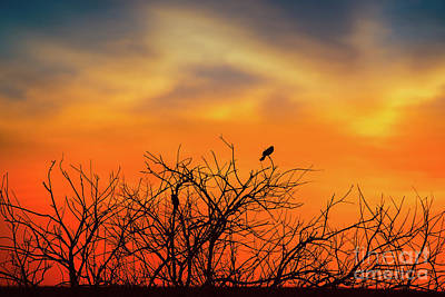 D800 Photograph - Twilight Birds by Ian McGregor