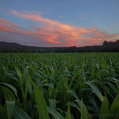 Cornfield Photograph - Twilight Cornfield by Jerry LoFaro