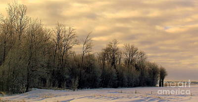 Photograph - Twilight by Elfriede Fulda
