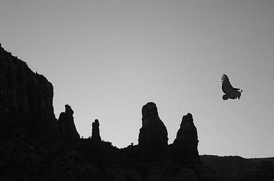 Photograph - Twilight Flight Bw by David Gordon