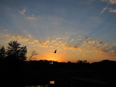 Photograph - Twilight Flight by Scott Hovind
