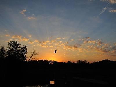 Photograph - Twilight Flight by Scott Hovind