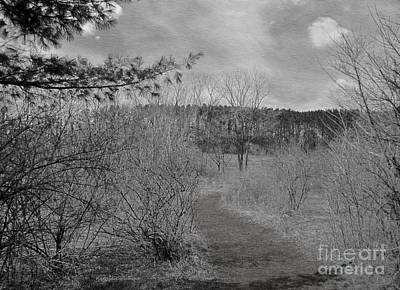 Photograph - Twilight by Kathie Chicoine