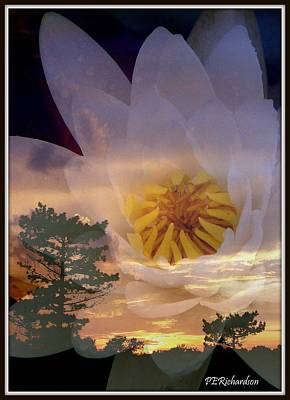 Photograph - Twilight Lily by Priscilla Richardson