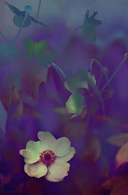 Photograph - Twilight Magic by Jenny Rainbow