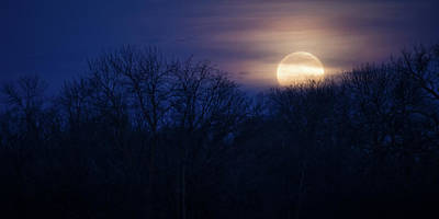 Photograph - Twilight Moon by Penny Meyers