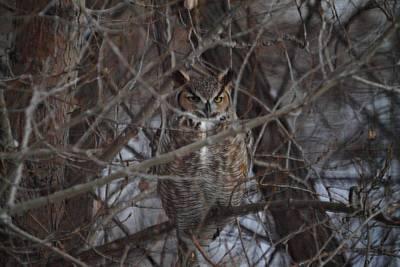 Raptor Photograph - Twilight Owl by Marcelo Albuquerque