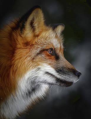 Vincent Van Gogh - Twilight Red Fox by Athena Mckinzie
