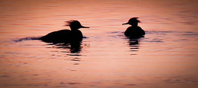 Birds Of A Feather Photograph - Twilight Serenade by Karen Wiles