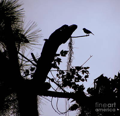 Photograph - Twilight Silhouette by Terri Mills