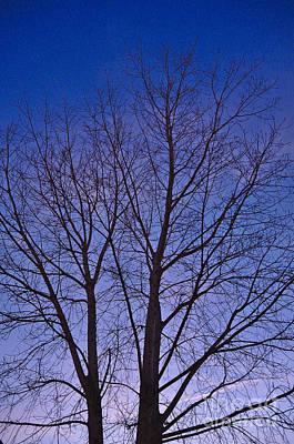 Tree Photograph - Twilight Tree by Angelo DeVal