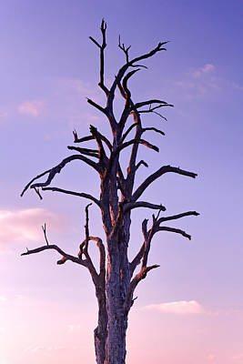Photograph - Twilight Tree by Nicholas Blackwell