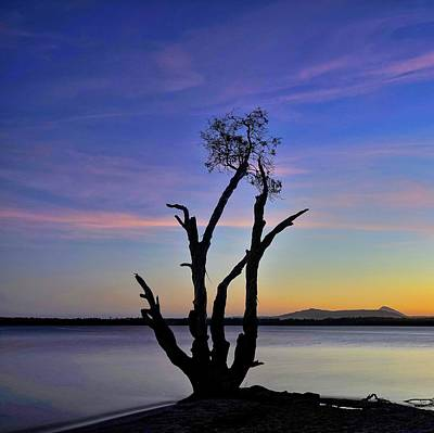 Photograph - Twilight Tree Silhouette Down By The Lake by Keiran Lusk