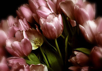 Photograph - Twilight Tulips by Jessica Jenney