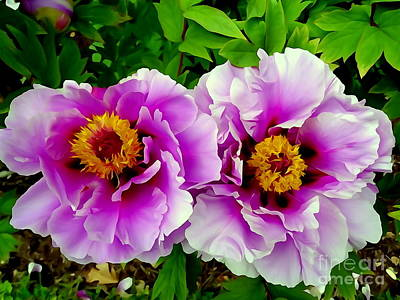 Photograph - Twin Beauties by Ed Weidman