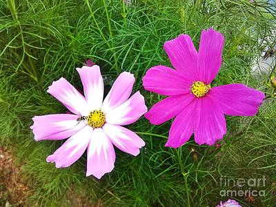 Photograph - Twin Cosmos Flowers by Erika H
