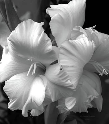 Photograph - Twin Gladiolus In Black And White by Jeanette C Landstrom