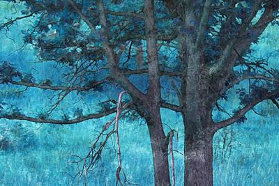 Twin Oaks Art Print by Bonnie Bruno