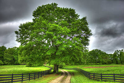 Large Oak Tree Photograph - Twin Oaks Drive Southern Living by Reid Callaway