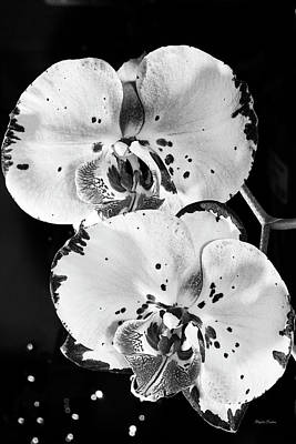 Photograph - Twin Orchids Black And White by Phyllis Denton