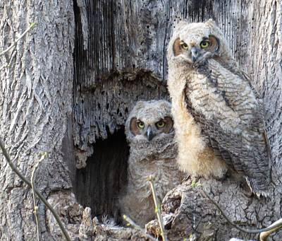 Photograph - Twin Owls by Jeanette Oberholtzer