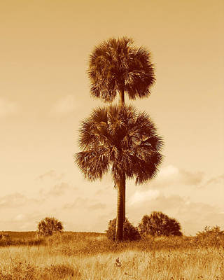 Art Print featuring the photograph Twin Palms by Peg Urban