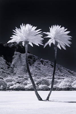 Photograph - Twin Palms by Sean Davey