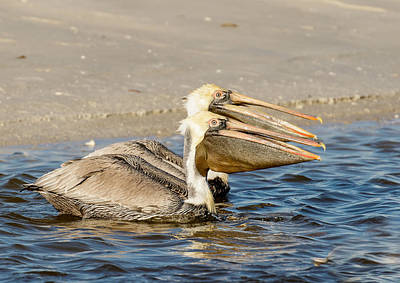 Photograph - Twin Pelicans by Phil Stone