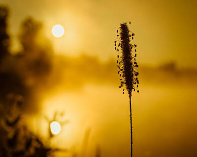 Photograph - Twin Suns Warm Dew Covered Grass by Chris Bordeleau