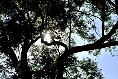 Photograph - Twin Tree Branches Sunshine by Matt Harang