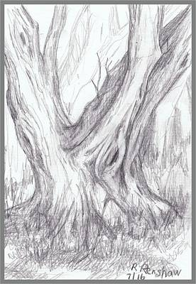Drawing - Twin Tree by Ruth Renshaw