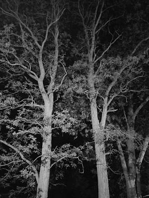 Photograph - Twin Trees B W by Rob Hans