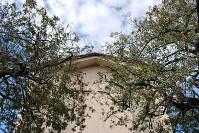 Photograph - Twin Trees Framing Church Building by Matt Harang