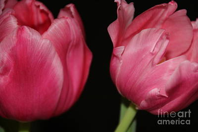 Photograph - Twin Tulips by Jennifer E Doll