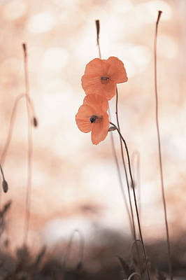 Photograph - Twins Aliens. Orange Poppies by Jenny Rainbow