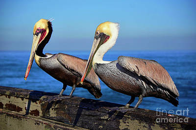 Photograph - Twins by Bob Brents