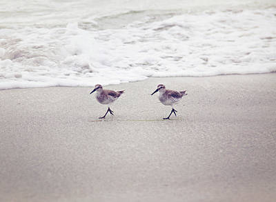 Photograph - Twins by Sue Collura