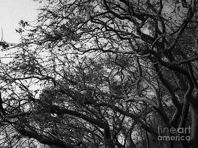 Twirling Branches Art Print