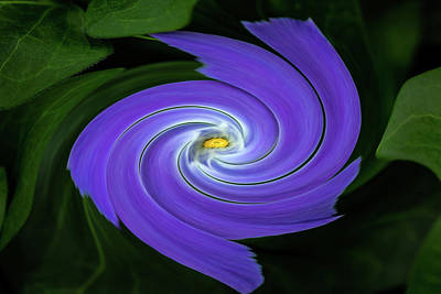 Photograph - Twirling Flower Pedals by Rick Strobaugh