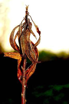 Twist Plant Art Print by Lauren  Macko