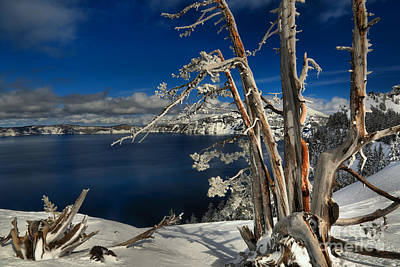 Photograph - Twisted And Frozen At Crater Lake by Adam Jewell