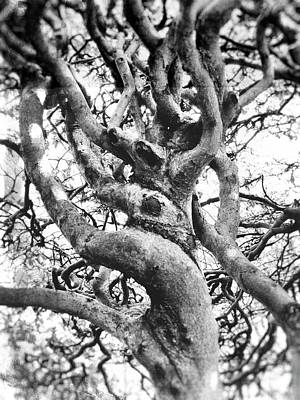 Photograph - Twisted And Gnarled by Karen Stahlros
