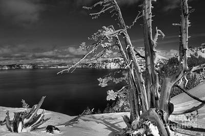 Photograph - Twisted And Tangled At Crater Lake - Black And White by Adam Jewell