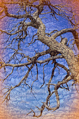 Photograph - Twisted Branches In The Sky Landscape by Aimee L Maher Photography and Art Visit ALMGallerydotcom