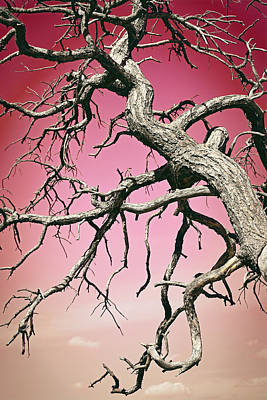Photograph - Twisted Branches In The Sky Red Sky by Aimee L Maher Photography and Art Visit ALMGallerydotcom