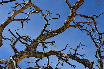 Photograph - Twisted Branches - Natural Abstract by Glenn McCarthy Art and Photography