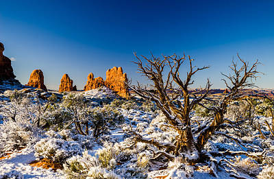Photograph - Twisted Cedar Arches National Park by TL Mair