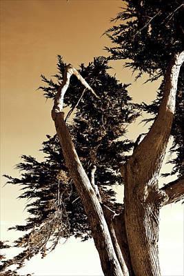 Carmel Photograph - Twisted Cypress 3 by Alan Hausenflock