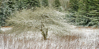 Photograph - Twisted Dotted Thorn Tree Snow by Thomas R Fletcher